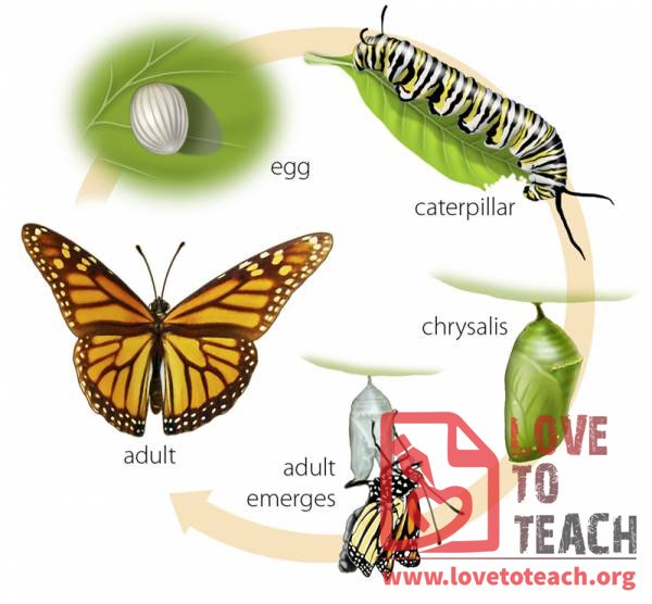 Life Cycle Of A Butterfly Pictures on Chinese Tools