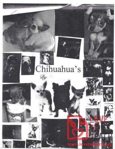 Animal Report Example - Chihuahuas