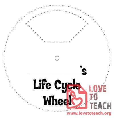 Life Cycle of a Butterfly Wheel